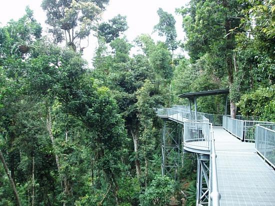 Amazon Rainforest - Blue Planet Biomes
