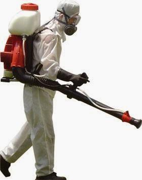 Aprende a evitar controlar y eliminar plagas en tu hogar - Que hacer contra las cucarachas ...