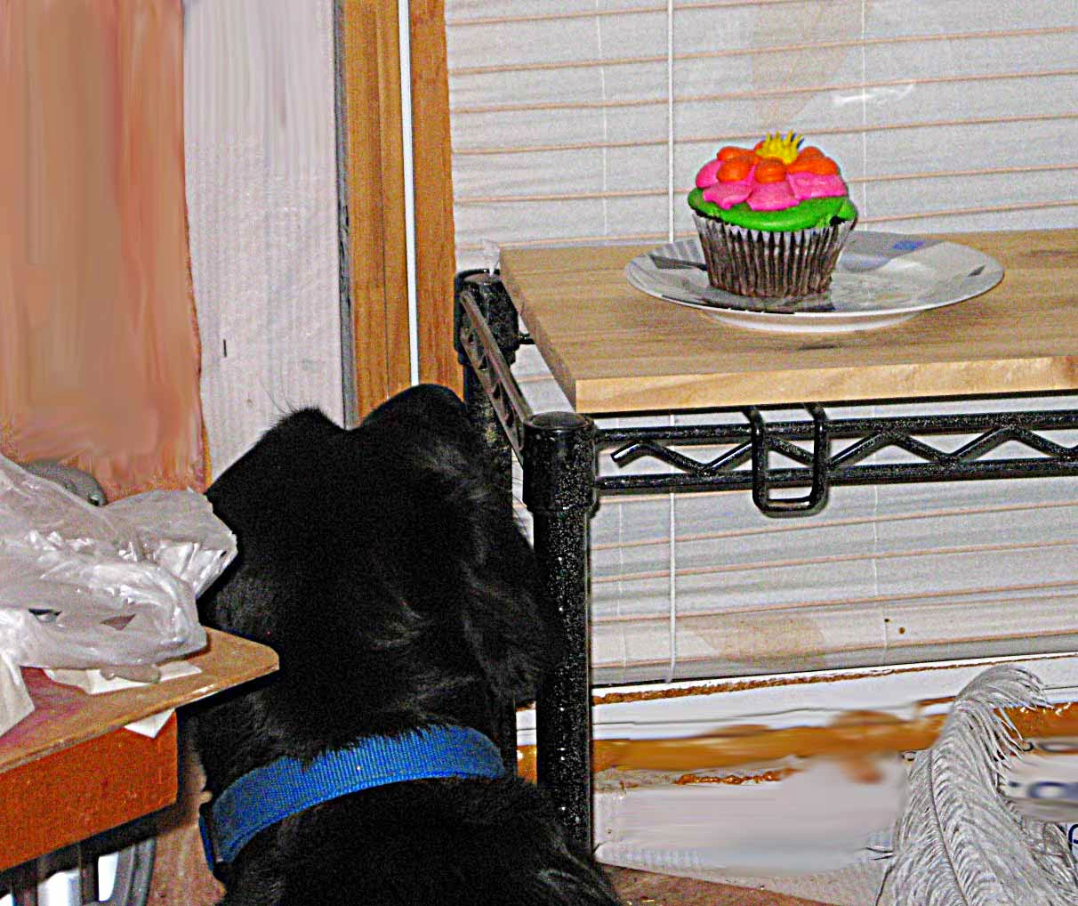 Bella getting closer to cupcake