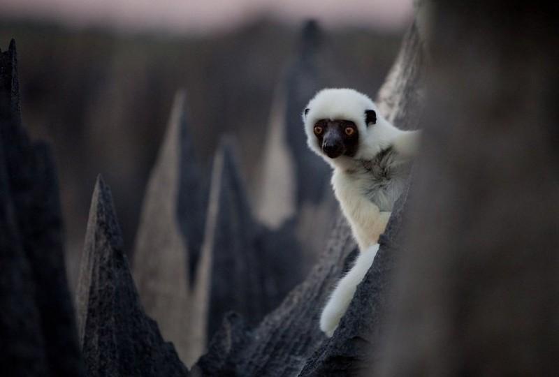 Madagaskar Kamena-suma-madagaskar-12