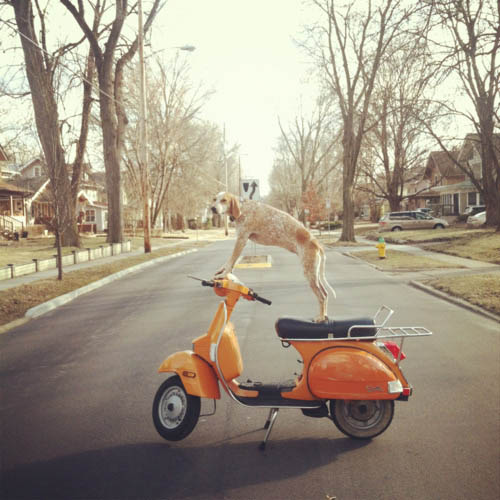 Madie on things - cão - vespa