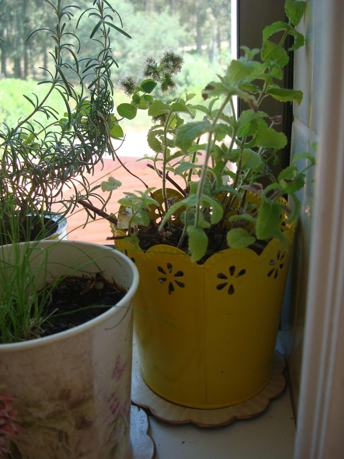 Plantas arom ticas para la cocina decorar tu casa es - Plantas aromaticas en la cocina ...