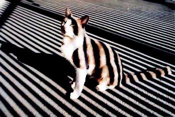 Deu Zebra III