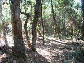 UWF Nature trail Pensacola, FL