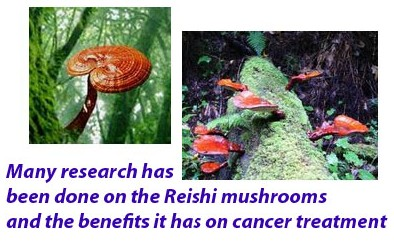 Reishi mushrooms benefits 6