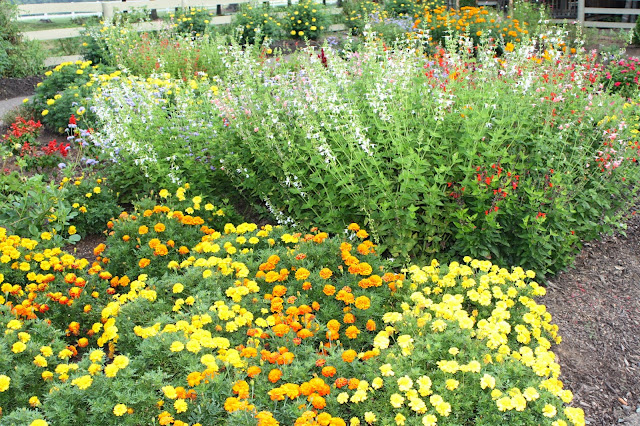 garden color bulk planting tips and ideas plants