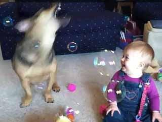 泡泡狗 9個月寶寶 狂笑