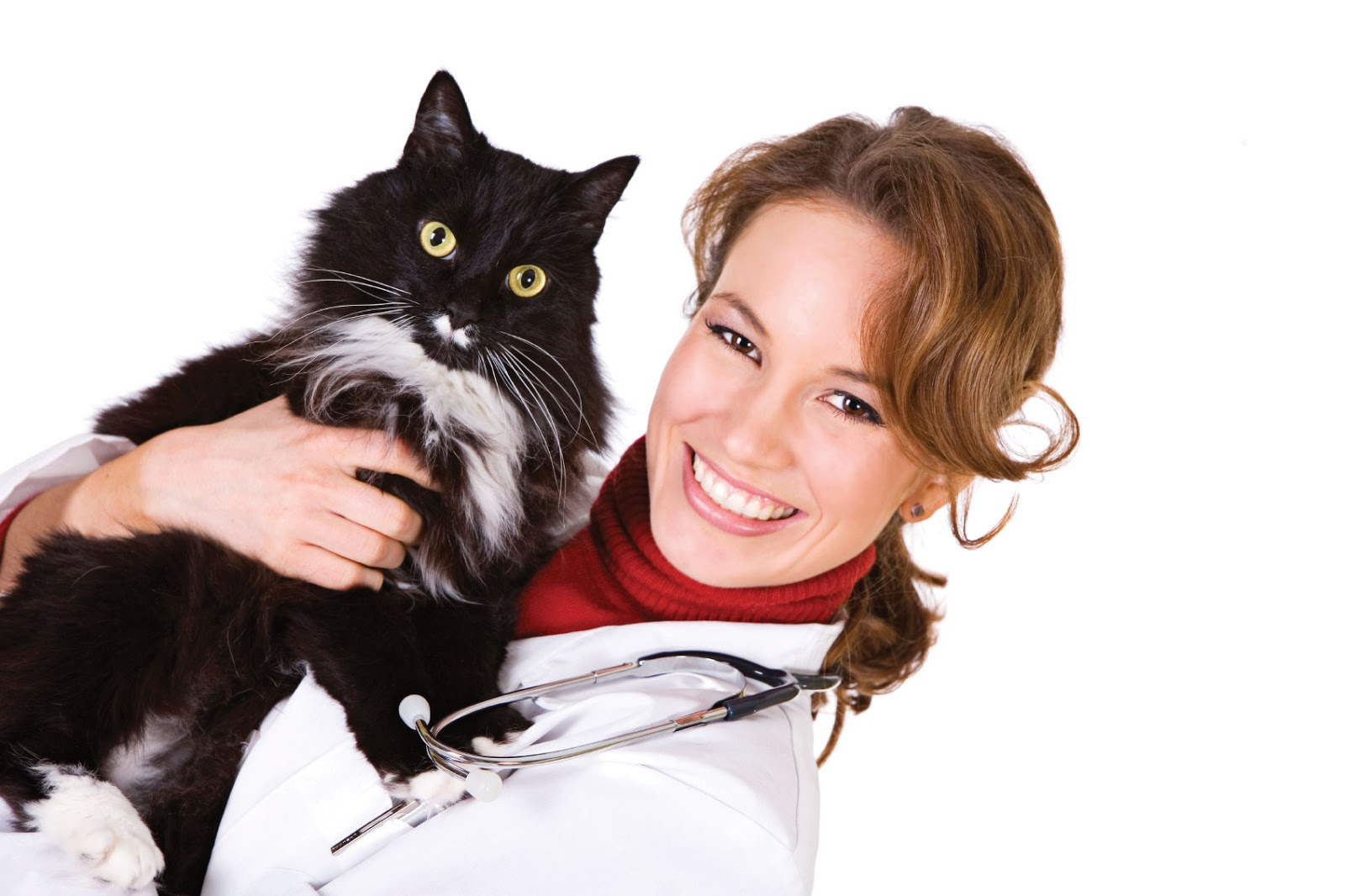 cat, Cat Health, Cats, pet, pets,