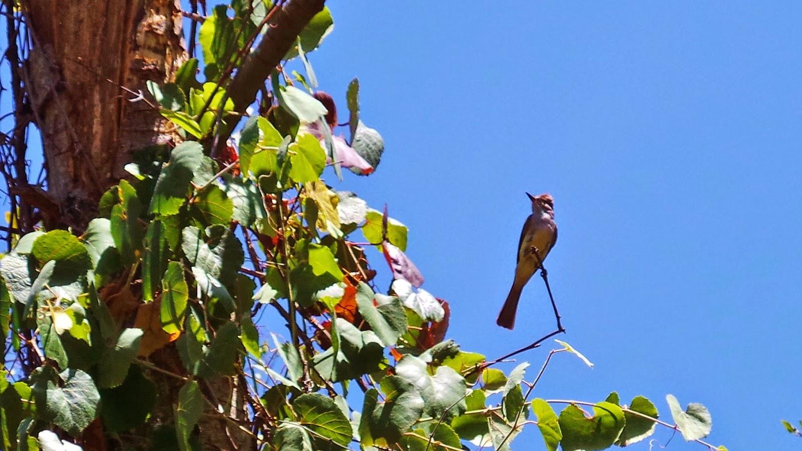 berkeley backyard bird blog arid mitchell canyon in mount diablo