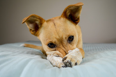 Punishment Alteritives For Cats And Dogs