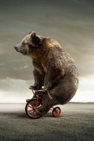 circus bear free funny iphone wallpapers  5s 5c 6