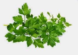 10 Plantas Medicinales que Puedes Cultivar en Casa