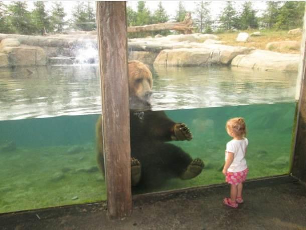 Imágenes Graciosas Zoológico