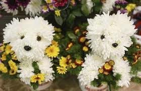 puppys as flowers