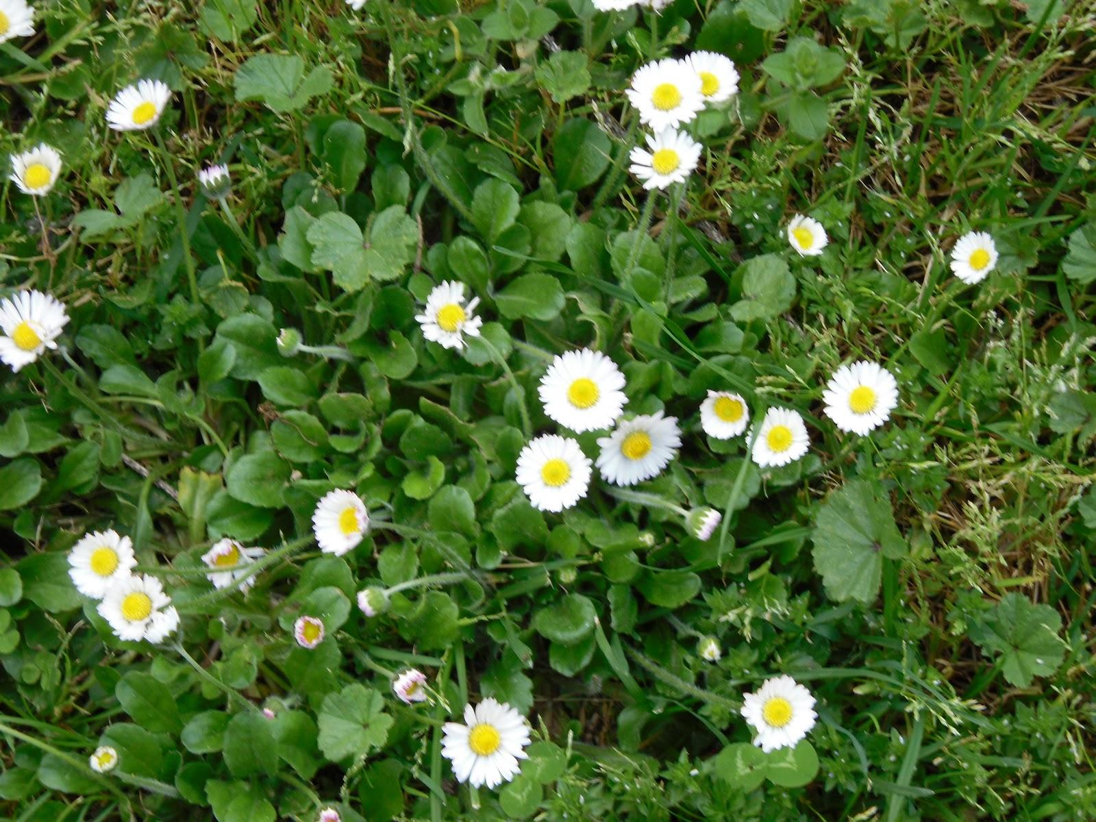 Fiore crea fiori di campo e di giardino - Fiori di giardino ...