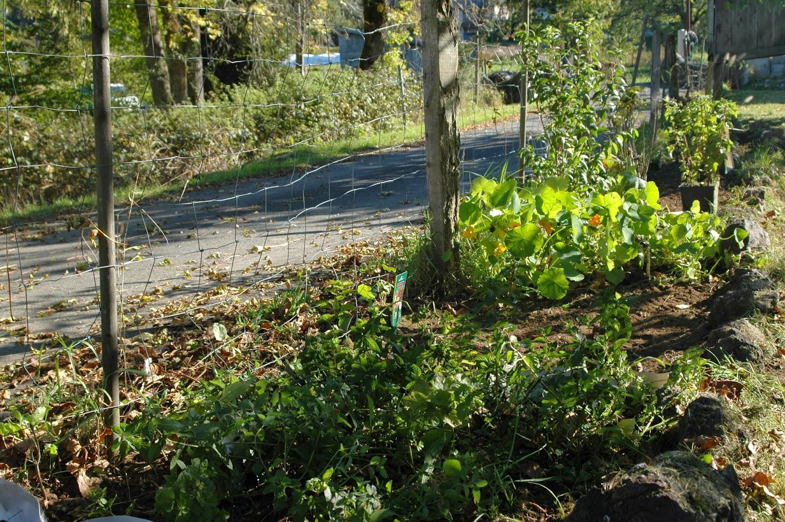 Ces doux moments un jardin extraordinaire for Jardin extraordinaire 2015 lieurac