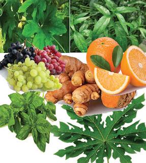 buah-buahan untuk malaria
