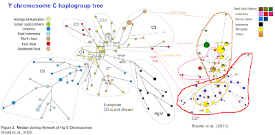 C haplogroup tree