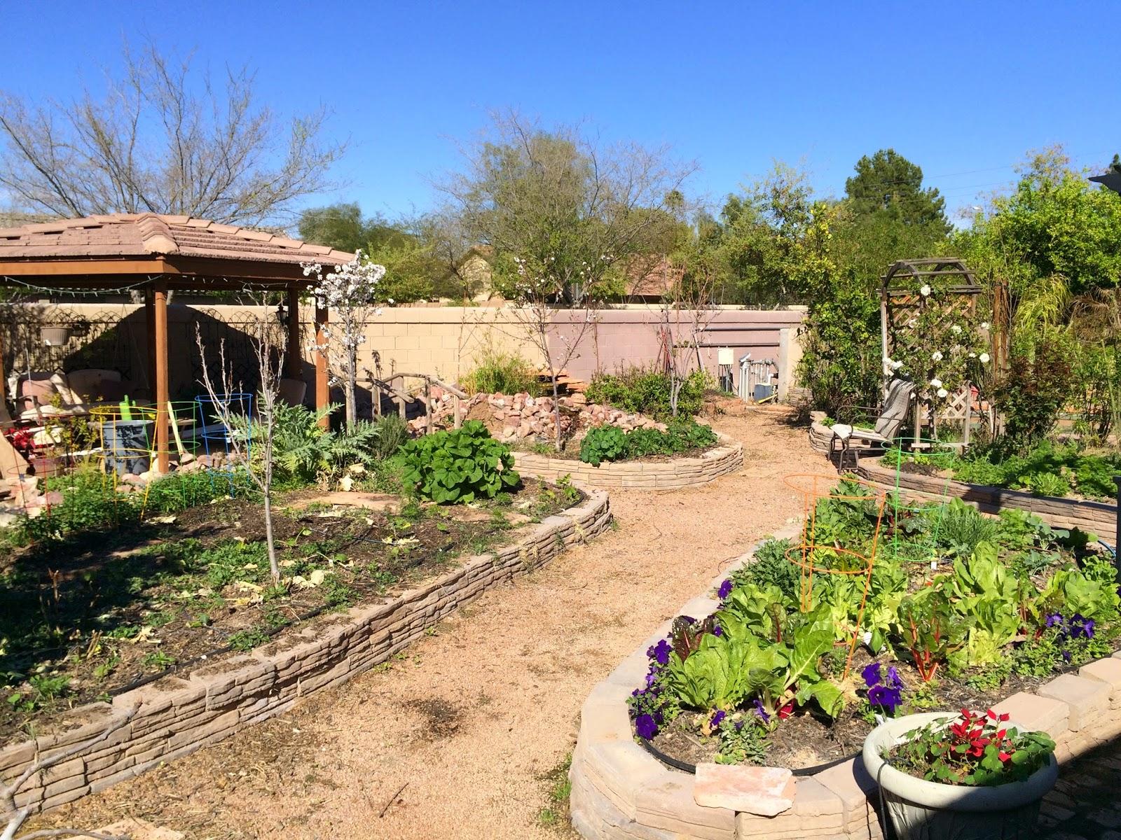 arizona backyard eden late february overview