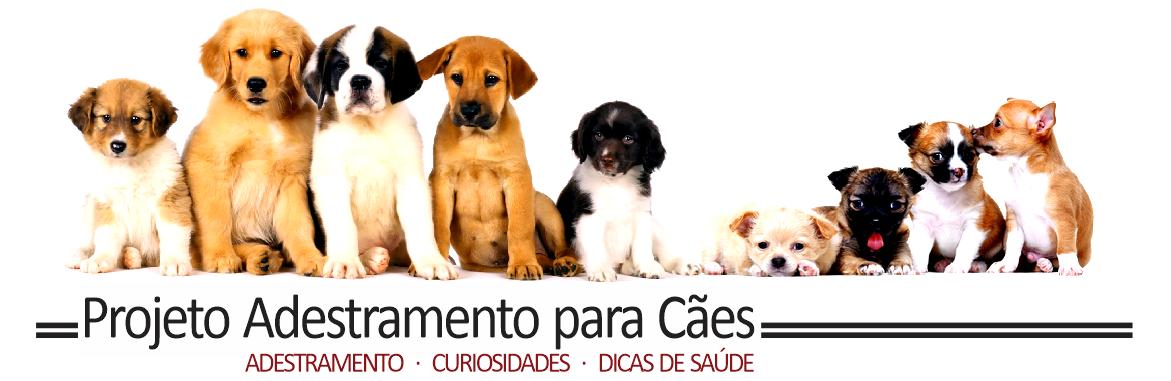 ADESTRAMENTO DE CÃES - ADESTRAMENTO PARA CÃES