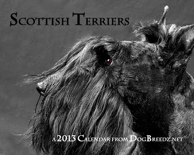 2013 Wall Calendar from DogBreedz.net featuring Scottish Terriers