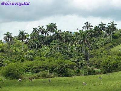 Cuba Valle Yumurì Matanzas