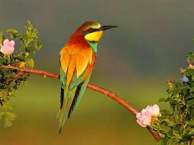 %D8%B7%D9%8A%D9%88%D8%B139 صور رمانسية طبيعية لأجمل الطيور 2014
