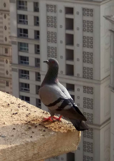 pigeon perched on building ledge