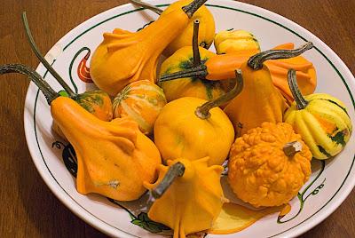 bowl of fall squashes