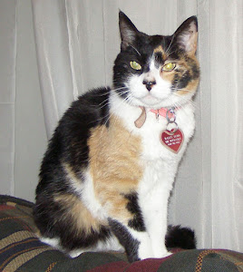 Haley, Calico