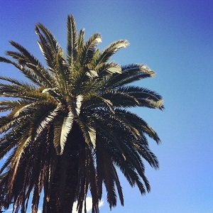 Palm tree by Nicole Tattersall