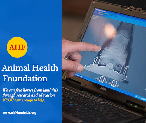 laminitis research and education Animal Health Foundation