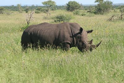 stropers actief in het Krugerpark