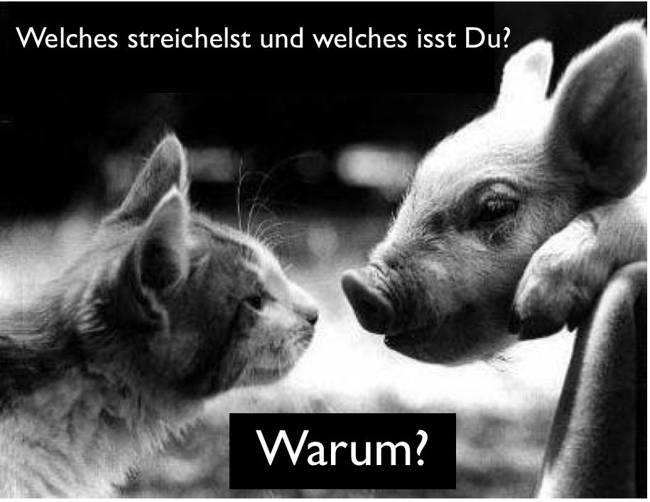 Lustige Tiere Bilder Mit Sprüchen - Ha Ha, heute schon gelacht? Lustige Sprüche, Witze und