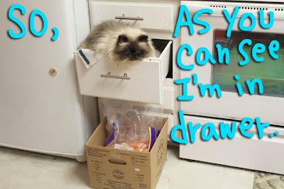 Goma-drawer_01