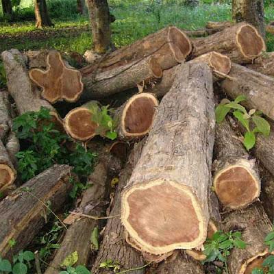 Teak trä