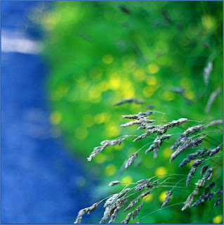 blue, green, grass, flowers,  Summer light © Annie Japaud Photography 2013