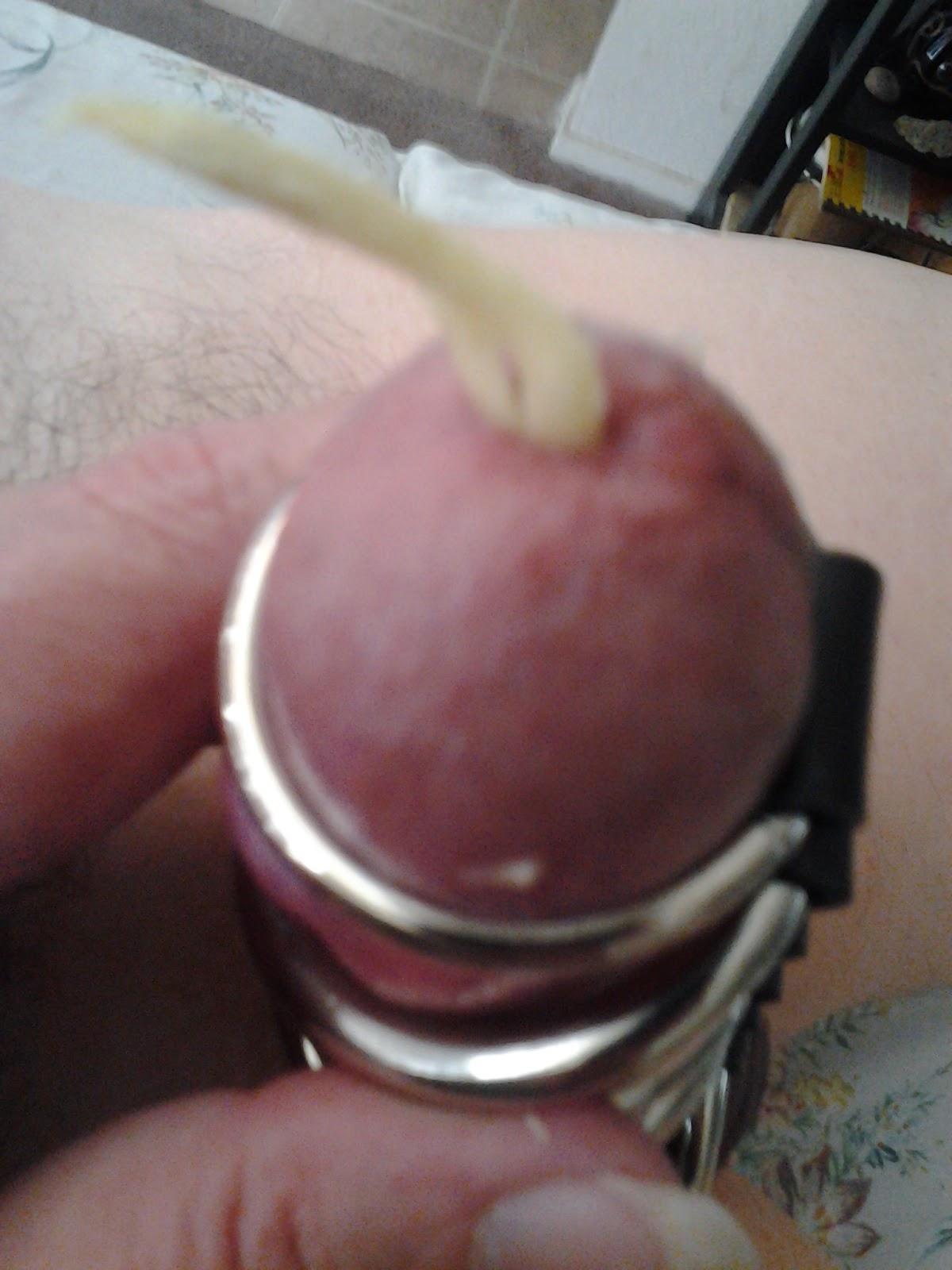 Grandes pênis gordos e pequenos de uma foto.