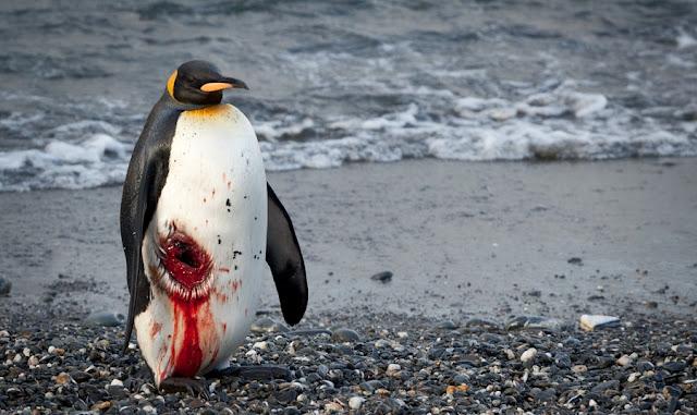 photo of penguin
