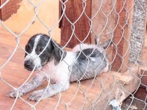 ONG fará ação para proteger cães e gatos em abrigo durante queima de fogos no Réveillon em Macapá (Foto: Anjos Protetores/Divulgação)