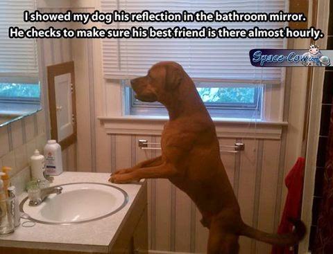funny pets mirror dog