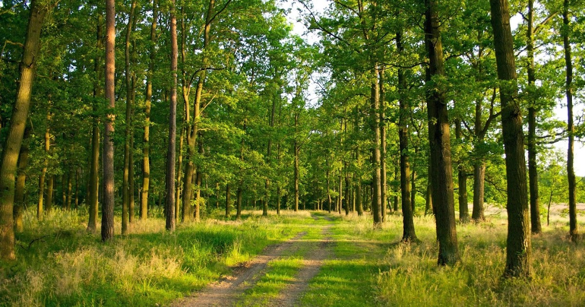 Peisazh pylli ne stinen e veres veres for Foto kafshesh