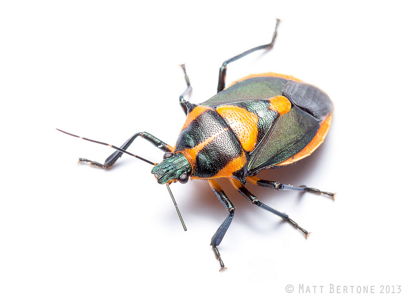 how to get rid of wood boring beetles in furniture