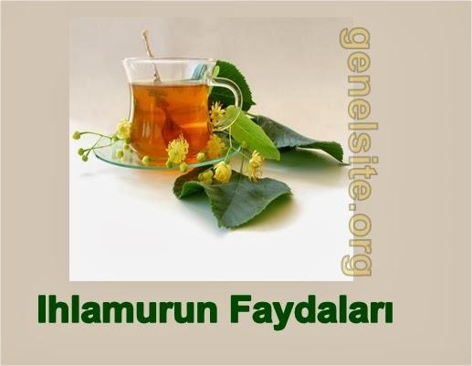 Ihlamurun faydaları ve ıhlamur çayı hazırlama