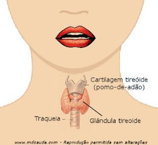 Localização da glândula tiroide