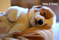 dogs, puppies, cute puppy, tired, sleepy, take it easy