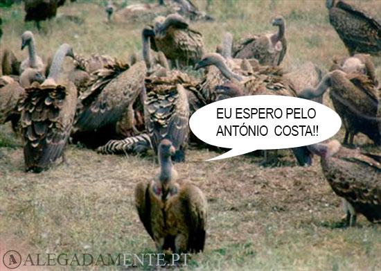 Imagens de Abutres – Eu espero pelo António Costa!!