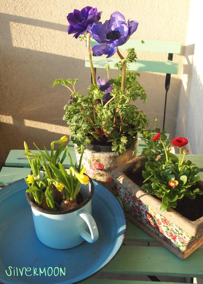 schoner Balkon Blumen Pflanzkasten Oliven Zitronenbaum