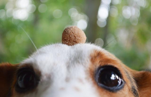 Proste smakłyki dla psa zrób to sam