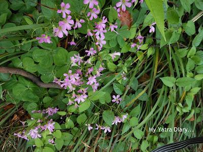 Pretty flowers - Hibiya Garden - Tokyo, Japnn